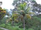 Jamaika-2003_7